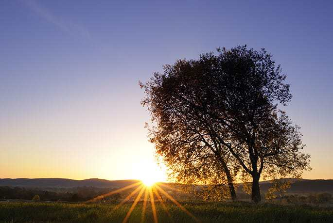 Stigma around suicide: The sun rising over a landscape, leaves rays of light dancing through a tree in the foreground
