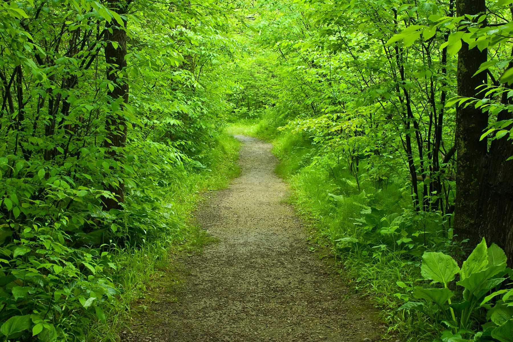 nature path forest walking healer healing service call suicide landysh depositphotos